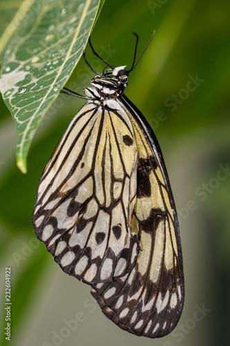 butterfly - 232604922