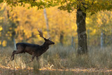 Deer running in the forest - 232607736