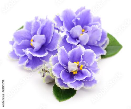 Fiołki piękne kwiaty.