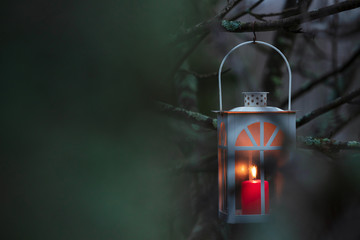 Lantern hanging from tree branch. Selective focus and shallow depth of field.