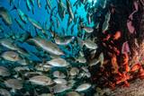 sardine school of fish ball underwater - 232651371