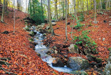Autumn Beech Forest wirh Creek Across in the Montseny Natural Park, Catalonia - 232653340
