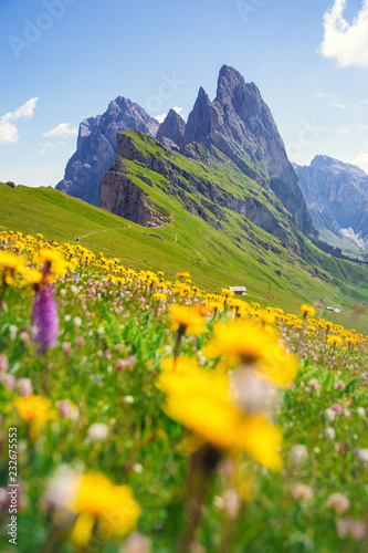 Foto Murales Dolomites Alps in springtime, green grass and flowers, Seceda mount in background. Trentino Alto Adige, Italy