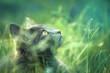 Chat gris dans l'herbe