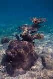 Coral outcrop