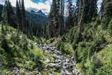 stream in forest Washington State