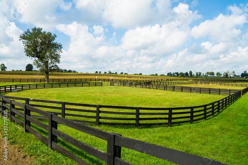 Konie w Lexington, Kentucky