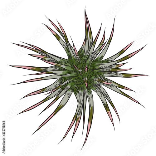 Ręcznie rysowane dzikie tropikalne dom Sukulent roślin. Skandynawski element nastroju do projektowania kart. Instalacja powietrzna do terrarium. Wektor.