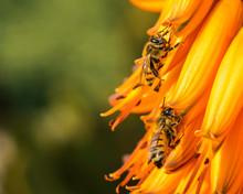 "Постер, картина, фотообои ""Bees at work in the garden"""