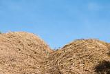 Rice straw on blue sky background, Thailand - 232755386
