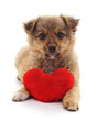 Puppy with toy heart.