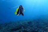 Underwater Fiji - 232781783