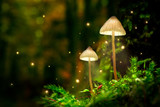Glowing mushroom lamps with fireflies in magical forest