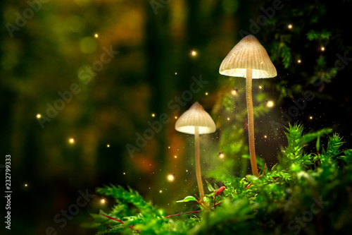 Leinwanddruck Bild Glowing mushroom lamps with fireflies in magical forest
