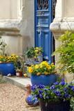 Fleurs colorées, ville de Chinon, Indre-et-Loire, France - 232806794