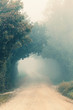 Foggy morning, autumn landscape with trees - 232817702