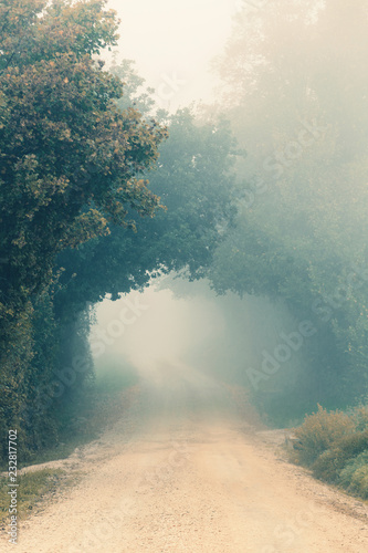 Foggy morning, autumn landscape with trees