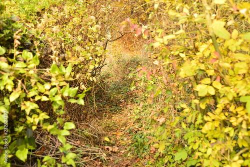 Leinwanddruck Bild Herbst Landschaft bunt