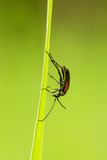 Insekt - 232833918