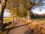 Ein Herbstspaziergang durch eine kleine schmale Allee in der nähe von Bünde im Norden von  Deutschland - 232839362