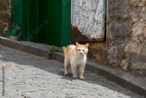 Stray cat on the road on the street of Gurzuf