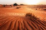 Sand dune in a desert. United Arab Emirates - 232850903
