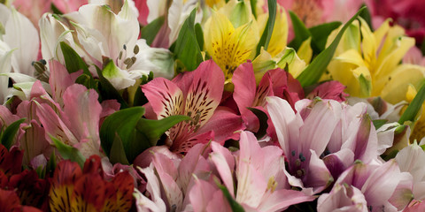beautiful large fluffy bouquet of colorful alstroemeria