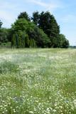Blumen auf einem Feld - 232857310