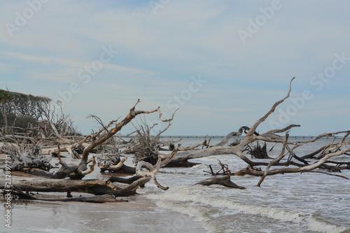 Driftwood Beach Talbot Island State Park Duval County Atlantic Ocean Florida