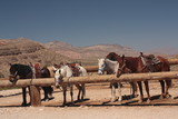 horse farm with mountains in background. Horses tied to posts.