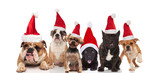 six adorable dogs wearing santa costumes sitting, standing and lying