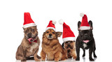 group of four santa dogs standing and sitting