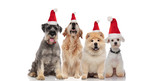 team of four cute santa dogs of different breeds panting
