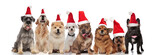 cute group of eight santa dogs sitting and standing