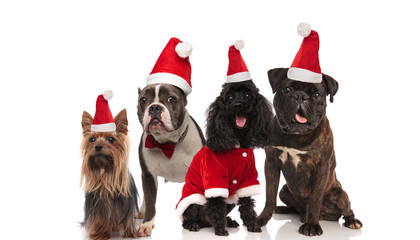 four adorable dogs of different breeds wearing santa costumes