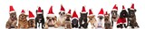 many cute dogs of different breeds dressed as santa claus