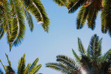 Palm trees background - 232933333