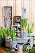 Leinwandbild Motiv Florist workplace: potting spring flowers.