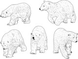 five polar bears outlines isolated on white