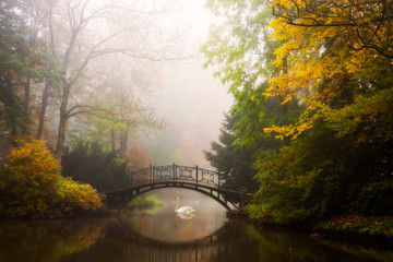 Scenic view of misty autumn landscape with beautiful old bridge in the garden with red maple foliage. © Gorilla