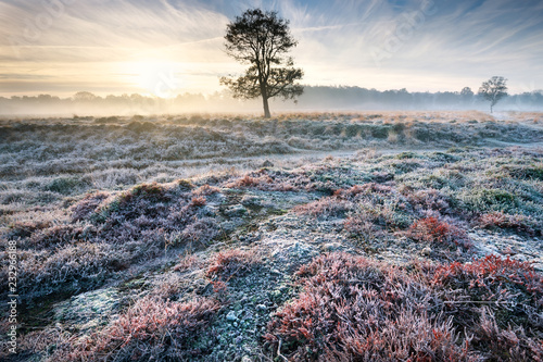 Foto Murales frosty misty sunrise over meadow
