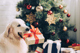 selective focus of golden retriever sitting with gift box in mouth near christmas tree at home