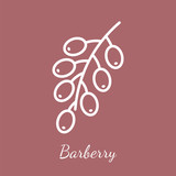 Barberry branch vector icon - 232977546