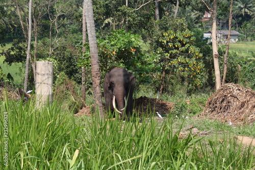Fridge magnet éléphant