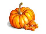 Colorful and juicy illustration of orange pumpkin. Drawing alcohol markers useful vegetable. Veggie food. - 232997308