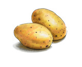 Colorful and juicy potato illustration. Drawing alcohol markers useful vegetable. Veggie food. - 232997374