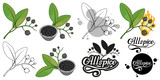 hand drawn allspice, spicy ingredient, allspice logo, healthy organic food, spice allspice isolated on white background, culinary herbs, label, food, natural healthy food, vector graphic to design - 232998950