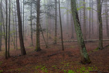 fog in spring forest at morning