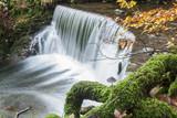 Waterfall Mushroom