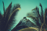 Palm trees under blue sky. Vintage post processed. - 233024171